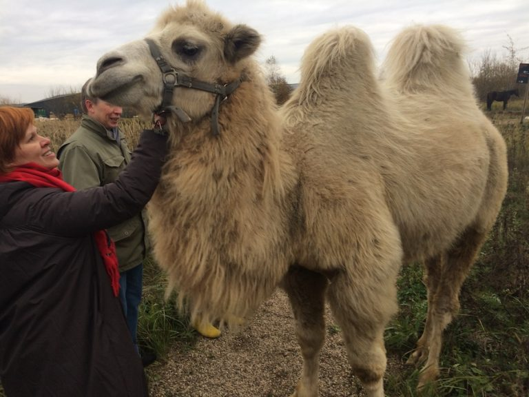 Lusia and Camel